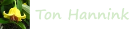 Logo website Ton Hannink